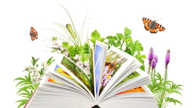 Это изображение имеет пустой атрибут alt; его имя файла - den-ekologich-znanij-1024x576-650x366.jpg